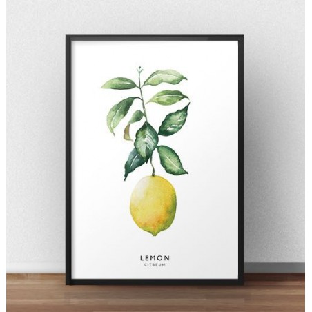 "Kolorowy plakat ""Cytryna"""