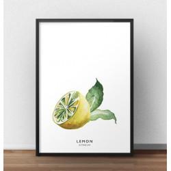 Plakat z połówką cytryny sprawiającej wrażenie namalowanej ręcznie farbami akwarelowymi