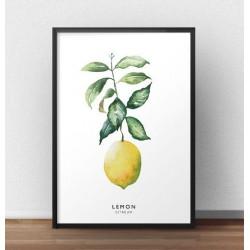 Plakat z całą cytryną i zieloną gałązką. Plakat wchodzi w skład zestawu dwóch plakatów z cytryną.
