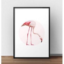 Plakat na ścianę z pochylonym flamingiem na tle jasno różowego koła