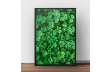 Przepiękny plakat przedstawiający zieloną koniczyną skąpaną w porannej rosie