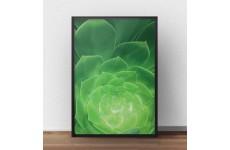 """Zielony plakat na ścianę z kaktusem """"Sukulent"""" oprawiony w ramę bez passepartout"""