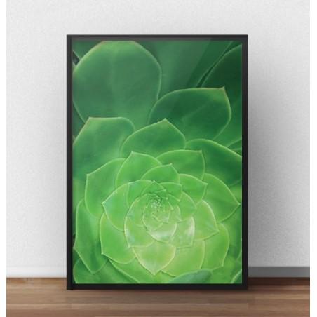 """Plakat na ścianę z kaktusem """"Sukulent"""""""