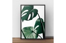 """Kolorowy plakat fotograficzny z zieloną rośliną """"Monstera"""""""