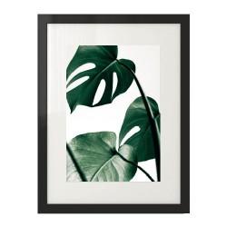 Plakat fotograficzny przedstawiający liście Monstery