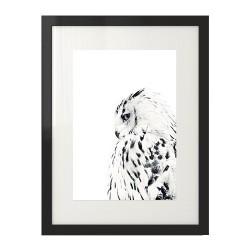Plakat z białą sową do powieszenia na ścianie