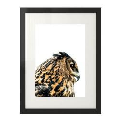 Poster z brązową sową do powieszenia na ścianie