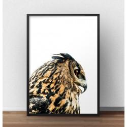 Plakat na ścianę z brązową sową