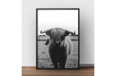 """Plakat z krową """"Highland cattle"""" w wersji czarno-białej"""
