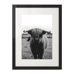 """Czarno-biały plakat przedstawiający krowę """"Highland cattle"""""""