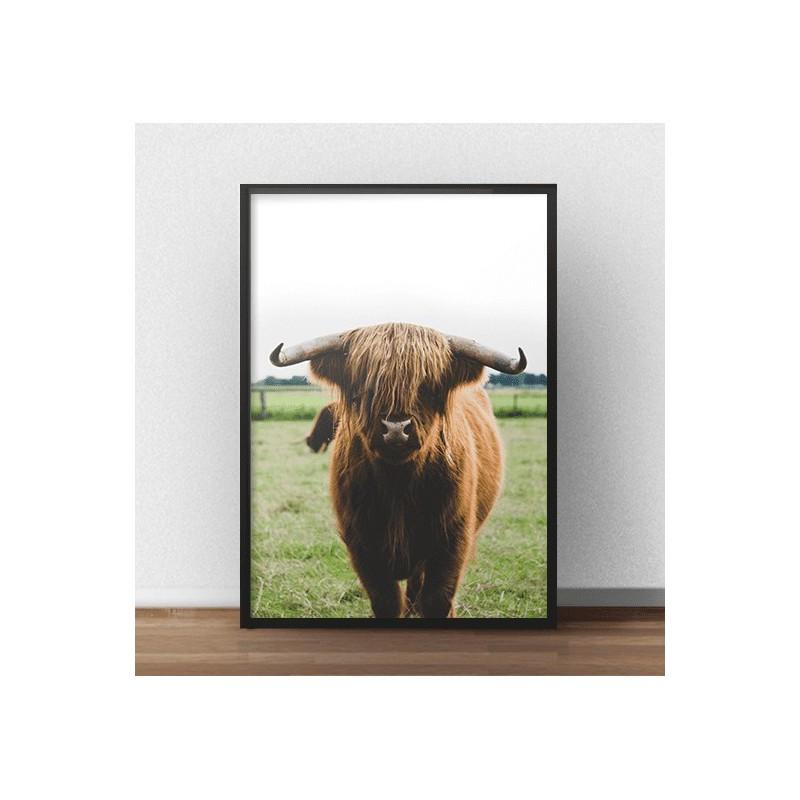 """Kolorowy plakat z krową szkockiej rasy wyżynnej """"Highland cattle"""""""