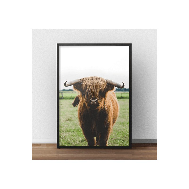 Poster with cow Highland cattle (2 versions)