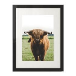 Skandynawski plakat z motywem krowy szkockiej rasy  wyżynnej w wersji kolorowej
