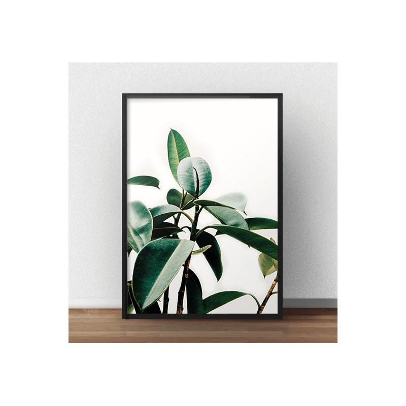 Skandynawski plakat fotograficzny przedstawiający liście figowca