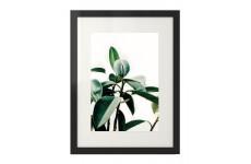 Plakat na ścianę przedstawiający liście figowca