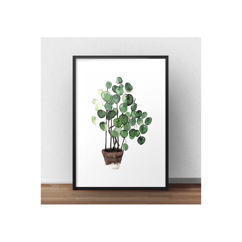 """Plakat botaniczny z rośliną doniczkową """"Pilea"""""""