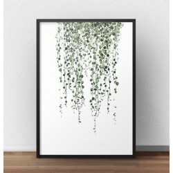 "Plakat botaniczny z rośliną ""Senecio rowleyanus"""