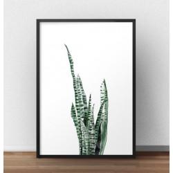 """Plakat z motywem botanicznym i rośliną """"Sansevieria"""""""