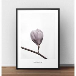 Elegancki plakat przedstawiający fioletowy pąk magnolii