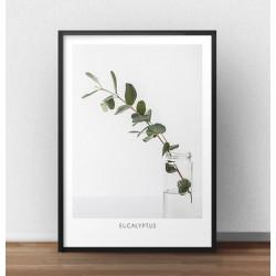 """Plakat na ścianę z gałązką krzewu """"Eukaliptus"""""""