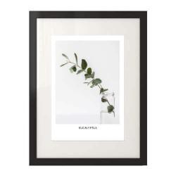 """Plakat na ścianę """"Eukaliptus"""""""