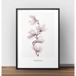 Plakat z kwiatem magnolii