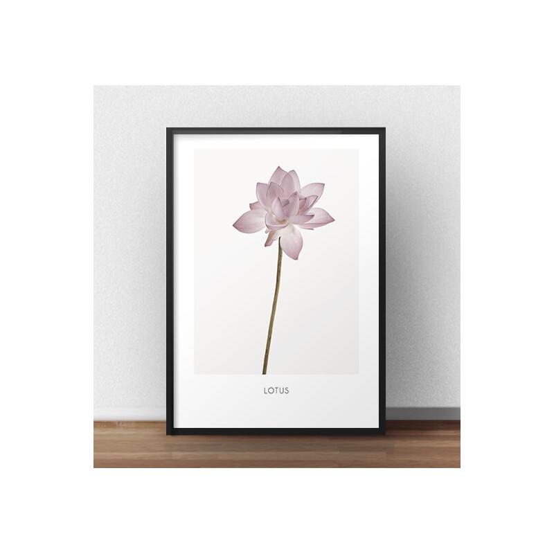Poster Lotus Flower