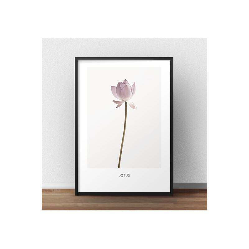 "Plakat botaniczny ""Lotos"""