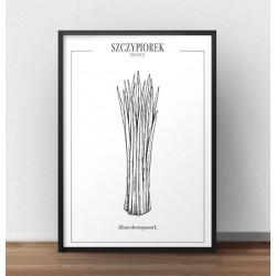 """Plakat do kuchni przedstawiający zioła i przyprawy """"Szczypiorek"""""""