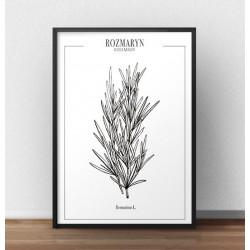 """Plakat do kuchni z ziołami i przyprawami """"Rozmaryn"""""""