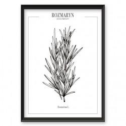Plakat kuchenny z rozmarynem i ziołami