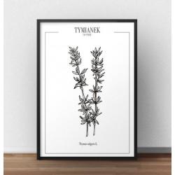 """Plakat kuchenny """"Tymianek"""" do powieszenia w jadalni lub kuchni"""