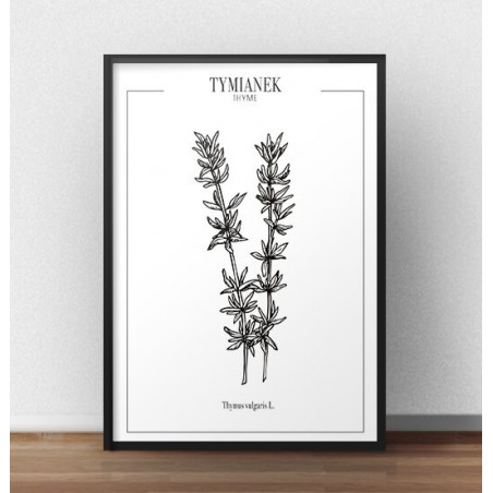 "Plakat do kuchni ""Tymianek"""