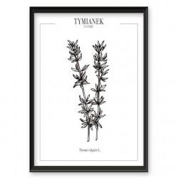Plakat do kuchni z ziołami i tymiankiem do jadalni