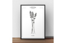 Plakat kuchenny do kuchni lub jadalni z gałązkami zioła lawendy