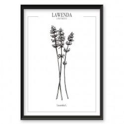 Plakat do kuchni z ziołem Lawendy