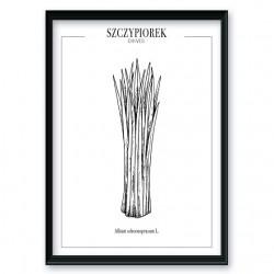 Plakat kuchenny ze szczypiorkiem wchodzący w skład zestawu plakatów do kuchni oraz jadalni