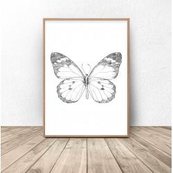 Zestaw 2 plakatów z ważką i motylem