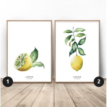 Zestaw 2 plakatów z cytryną