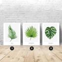 Zestaw 3 plakatów botanicznych - liście 1