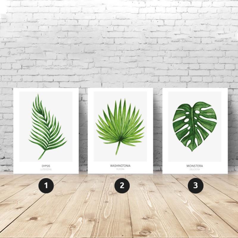 Zestaw 3 plakatów botanicznych