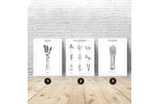 Zestaw 3 plakatów kuchennych z ziołami i przyprawami