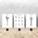 Set of 3 kitchen posters with herbs and spices