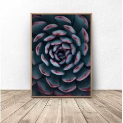 """Plakat botaniczny """"Czerwonawy kaktus"""""""