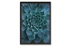 "Plakat botaniczny ""Piękny kaktus"""