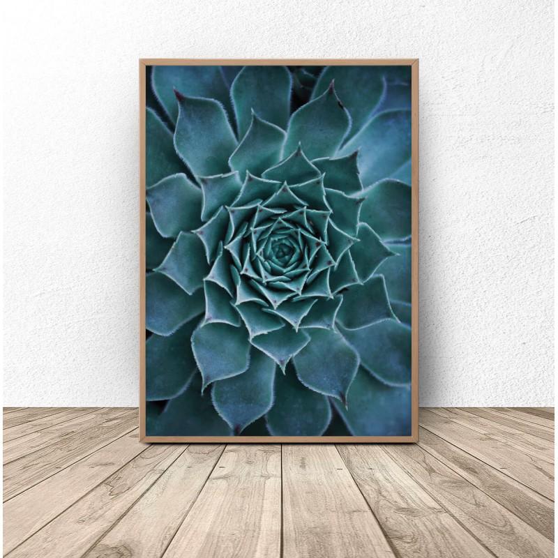 Botanical poster Beautiful cactus
