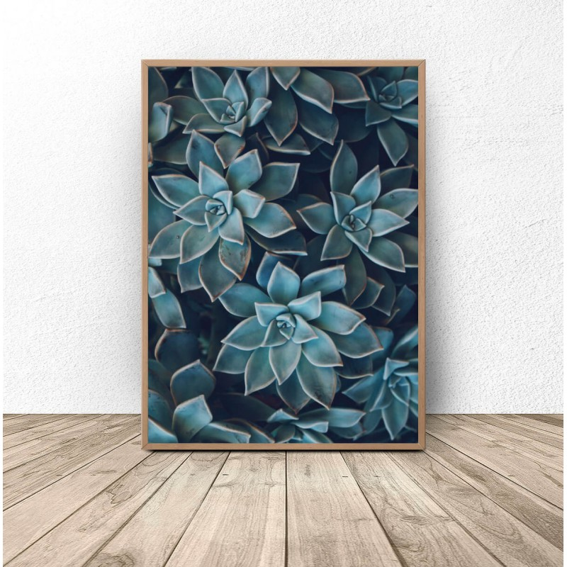 Botanical poster Small succulents