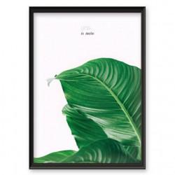 """Plakat botaniczny z motywacyjnym napisem """"Less is more"""""""