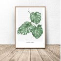 Botanical poster Philodendron 2