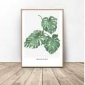 Plakat botaniczny Philodendron 2